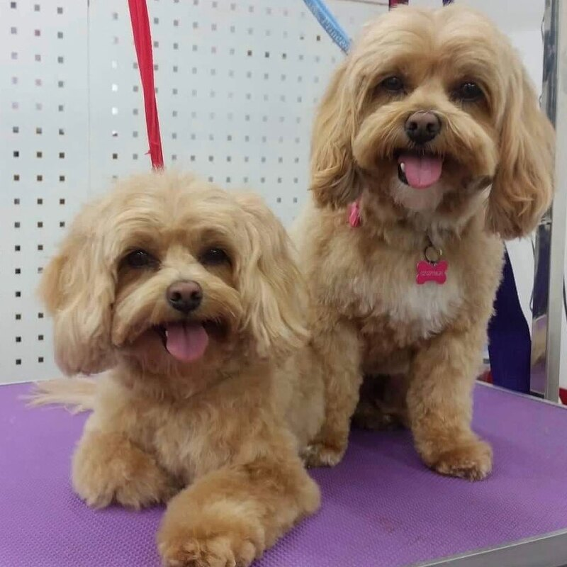Coco and Bailey